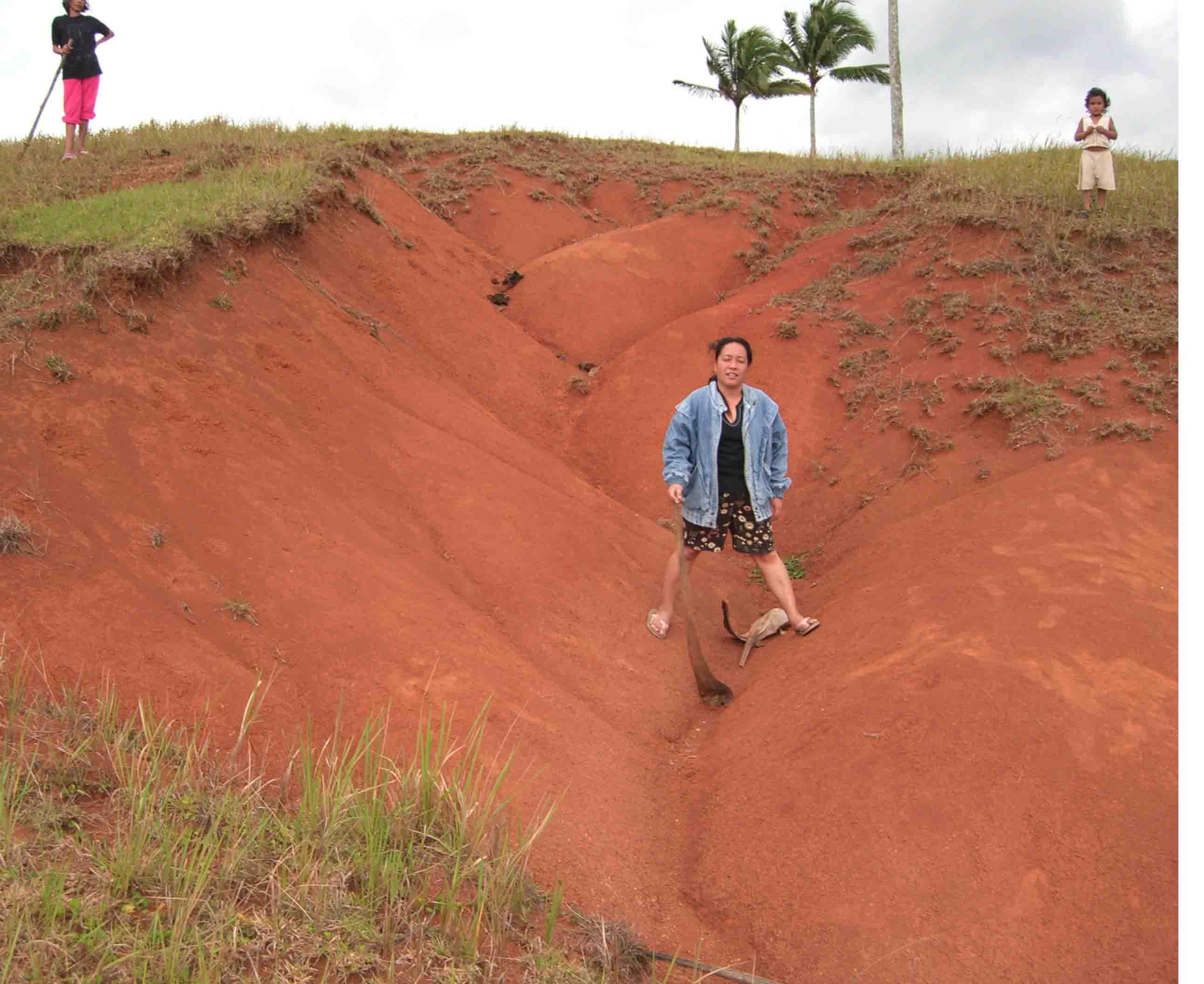 Wiederaufforstung Von Regenwald Maninoy Patenschaft Philippinen