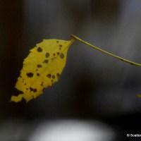 Life's Leaf