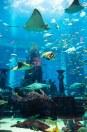 473c4shutterstock_160991747---Dubai-akvaryumda-bir-mercan-kayaligi-uzerinde-tropikal-baliklar