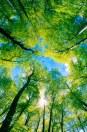 c1548shutterstock_55023121---gokyuzune-uzanan-yesil-agac-dallari