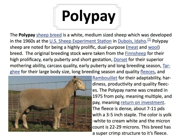 breed-info-polypay