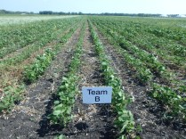 Team B soybeans at the R2 stage.