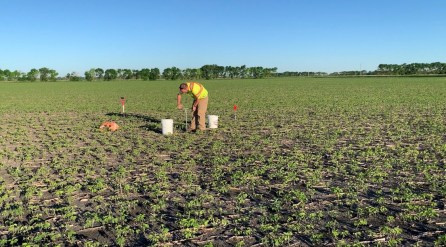 Establishing a microplot for nitrate tracking in a soybean field.