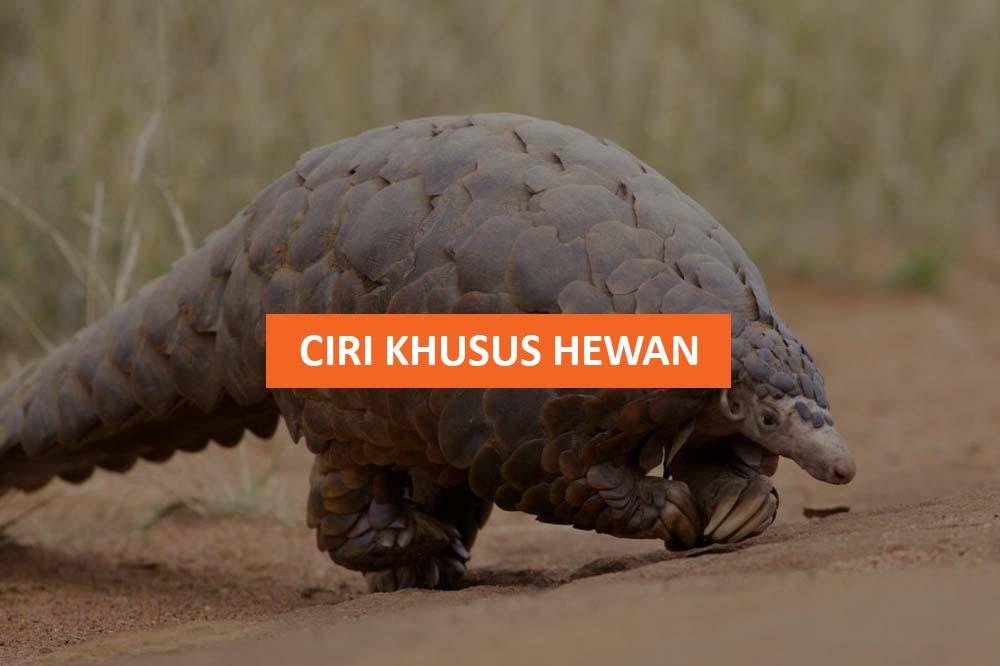 CIRI KHUSUS HEWAN