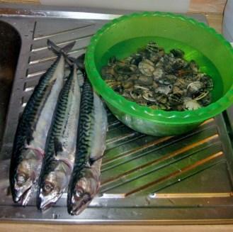 Three local mackerel.