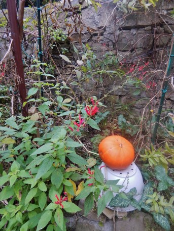 This pumpkin that was still growing in Piran garden last week is a bright orange circle.