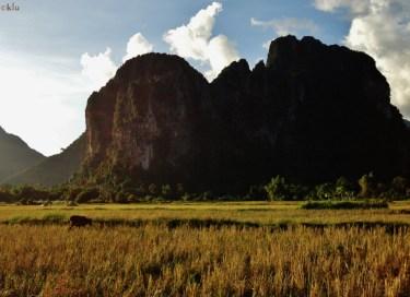 Thru the rice fields of Vang vieng.