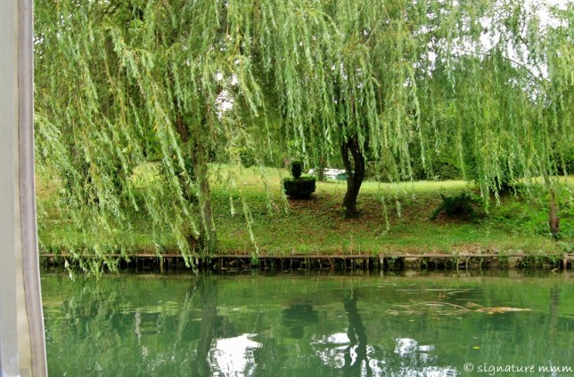 Love these willows.