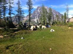 Mountain goats take over base camp.