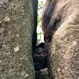 Jammed stone @ Blockheide, Waldviertel, NÖ