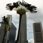 Palm trees against skyscraper