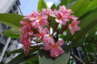 Wonderful pink - orange blossoms