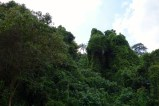 Living in the city means living in the jungle