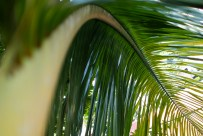 Under a palm tree - did I mention that I love palm trees?