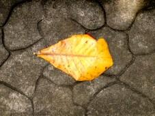 A wonderful yellow leaf