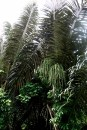 'Urban Jungle' Leaves