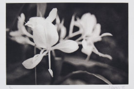 """""""White Ginger"""", 1998. Photogravure, edition of 20. Image: 6 ¾"""" x 10"""", paper: 11"""" x 14""""."""