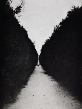 """Allee II"", 2016. Photogravure, edition of 12. Image: 12"" x 8"", paper: 18"" x 14""."