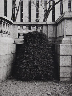 """Shrub II"", 2016. Photogravure, edition of 12. Image: 12"" x 8"", paper: 18"" x 14""."