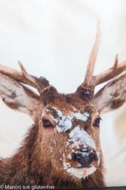 Hirsch im Schnee