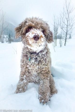Momo im Schnee