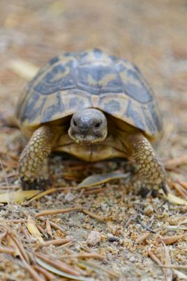 Land-Schildkröten