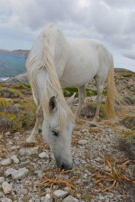 Pferd an der Küste