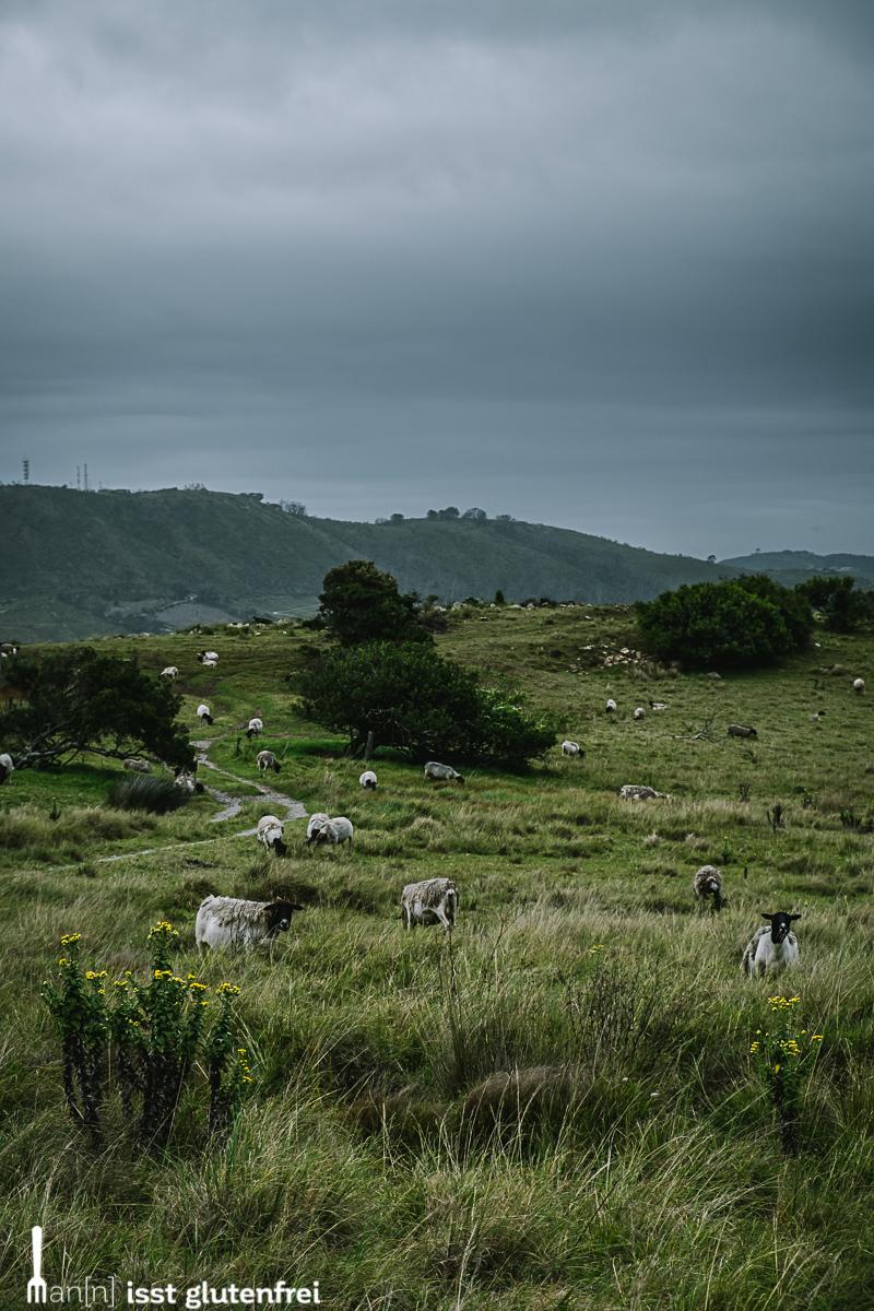 Südafrika 2019 - Garden Route - glutenfrei auf Reisen