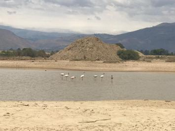 Pink flamingos return to Laguna Sulti
