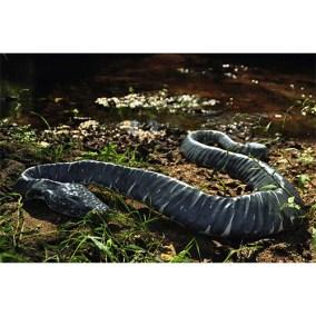 Serpiente bifurbida</br> 2011
