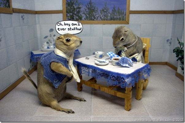 Gopher teatime at Gopher Hole Museum, Torrington Alberta