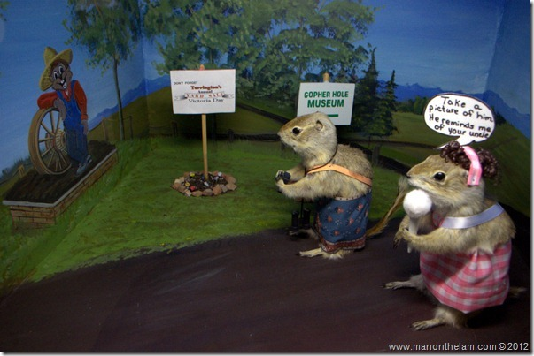 Gopher tourists at Gopher Hole Museum, Torrington Alberta