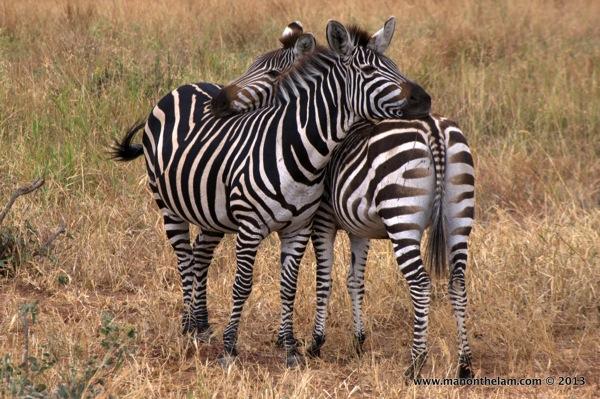 Tarangire National Park Tanzania 380