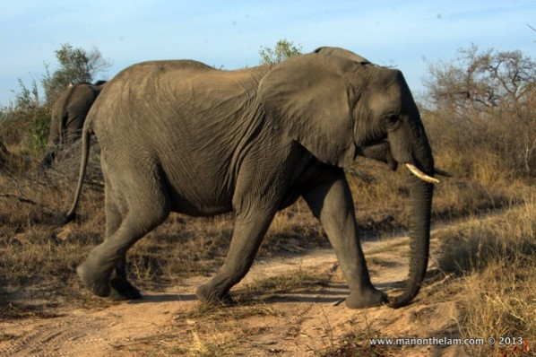 Elephant-at-Africa-on-Foot-Safari