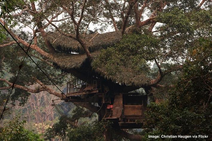 Treehouse Gibbon Trail Laos