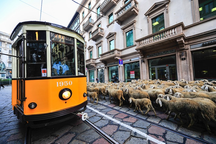 Man On The Lam Top 100 Travel Blog Posts of 2015 so far by social media shares  Tram Sheep Milan