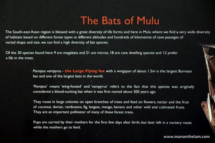 Gunung Mulu National Park  Mulu Caves Sarawak Borneo Malaysia 048
