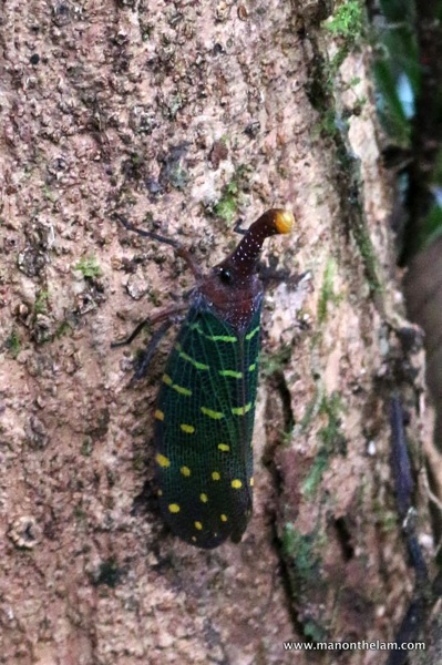 insects -- Mulu Caves National Park Sarawak Borneo Malaysia