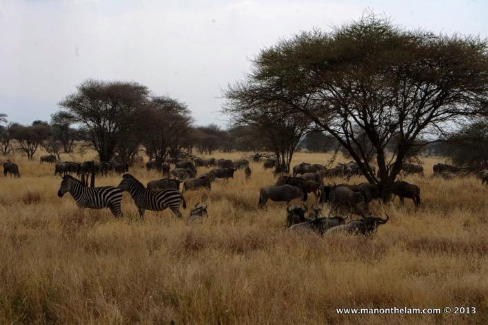 Tarangire National Park Tanzania 366