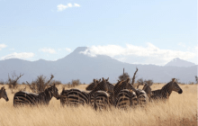Why you should plan a Serengeti Safari in 2017