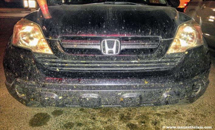 Honda CRV bugs smushed on front bumper of vehicle Saskatchewan