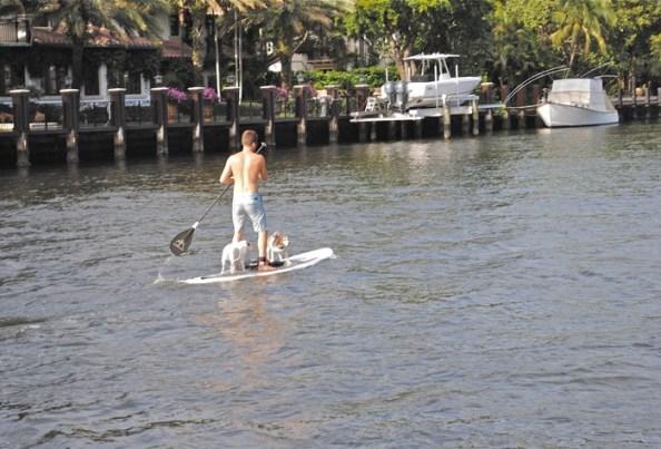 Paddle board 1170330 1280