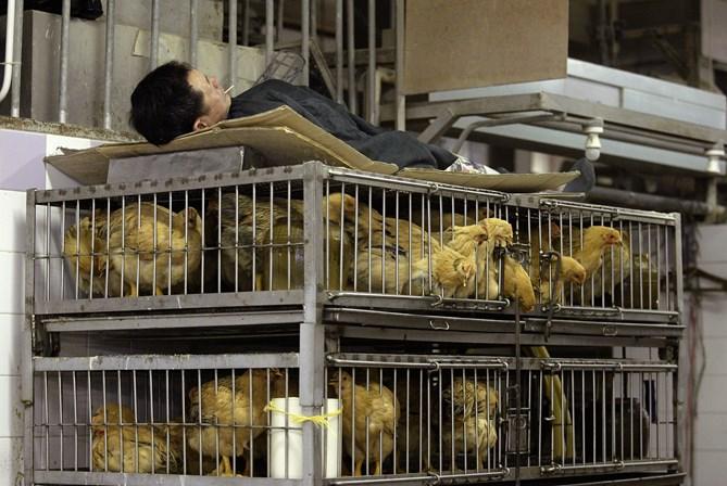 China anuncia fechamento gradual de mercados de aves vivas