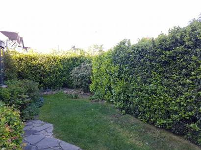 Doing the annual hedge cutting and bushes1