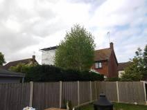 facing back and topping leylandii hedge alongside the boundary (Burnham on Crouch)2
