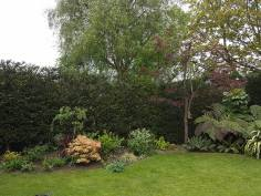 reducing in height leylandii and facing back1