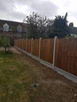 Removal of boundary hedge+ roots at wix 1