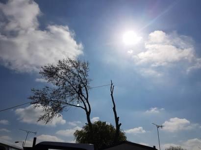 Take down poplar tree Steeple Bay caravan park12