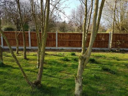 Taking down existing boundary fence5