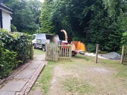 Danbury X 2 take down leylandii trees in the corner 1